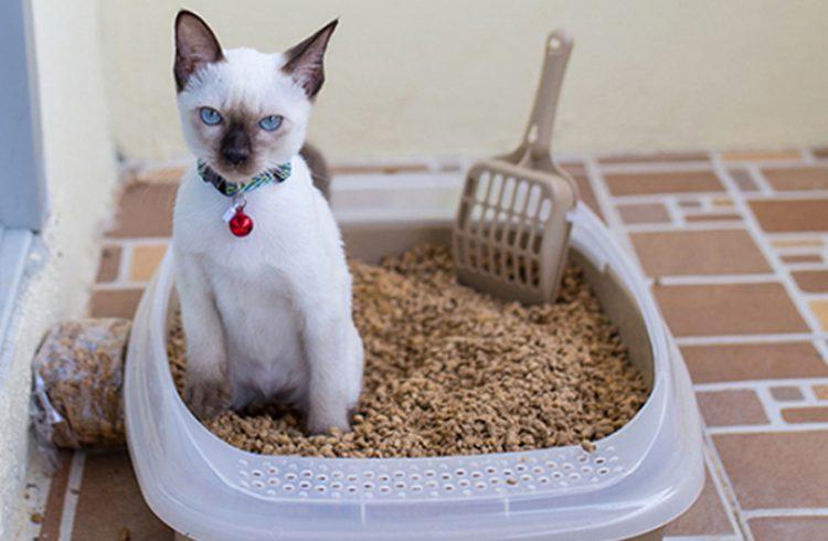 Рейтинг ТОП 7 лучших наполнителей для кошачьего туалета
